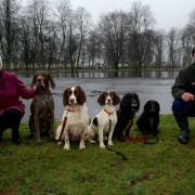 Renfrewshire's dog owners called on to lead by example