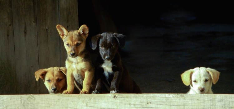 MSP pledges support to new national campaign: say no to puppy dealers
