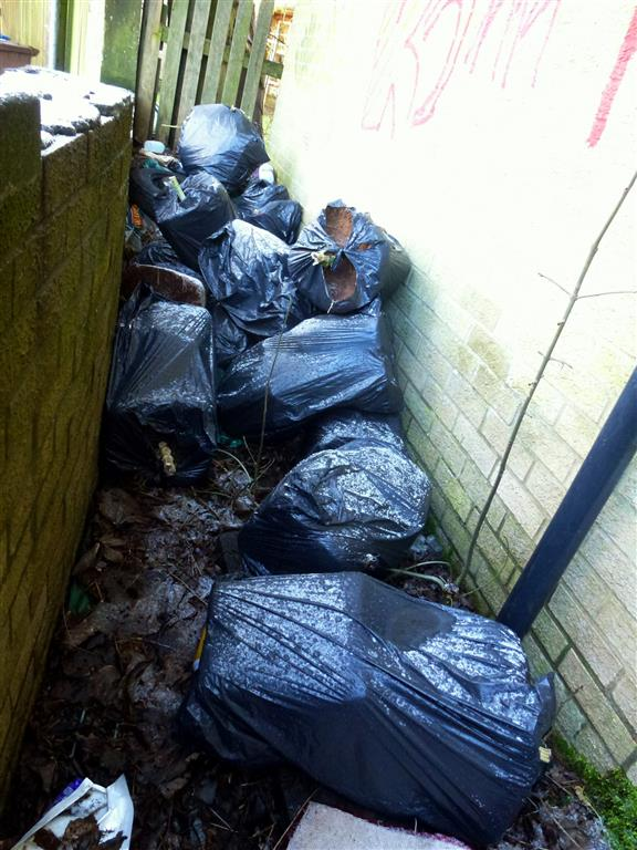 Bags Of Cannabis Plants Found Dumped In Paisley Street