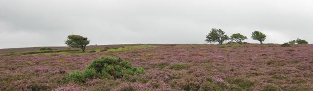Exmoor - North Devon
