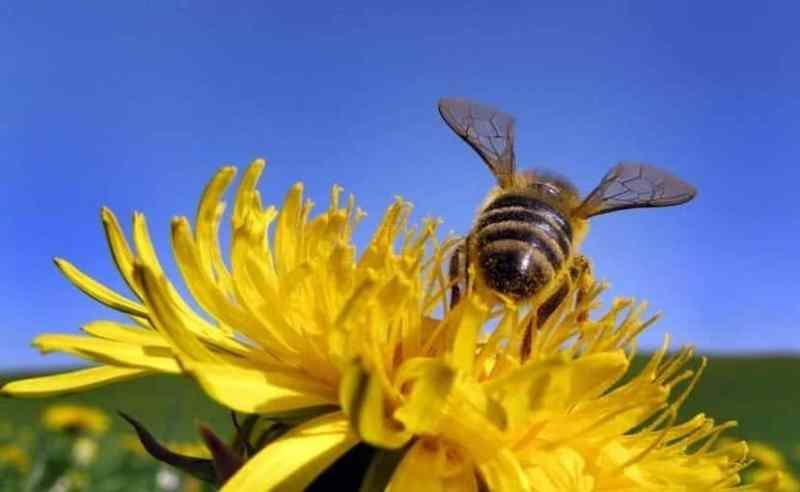 cambio climático y abejas