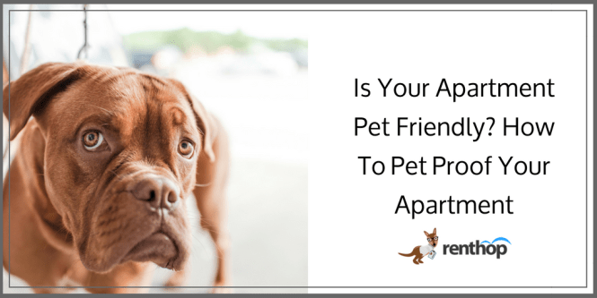 Pet Proof Your Apartment