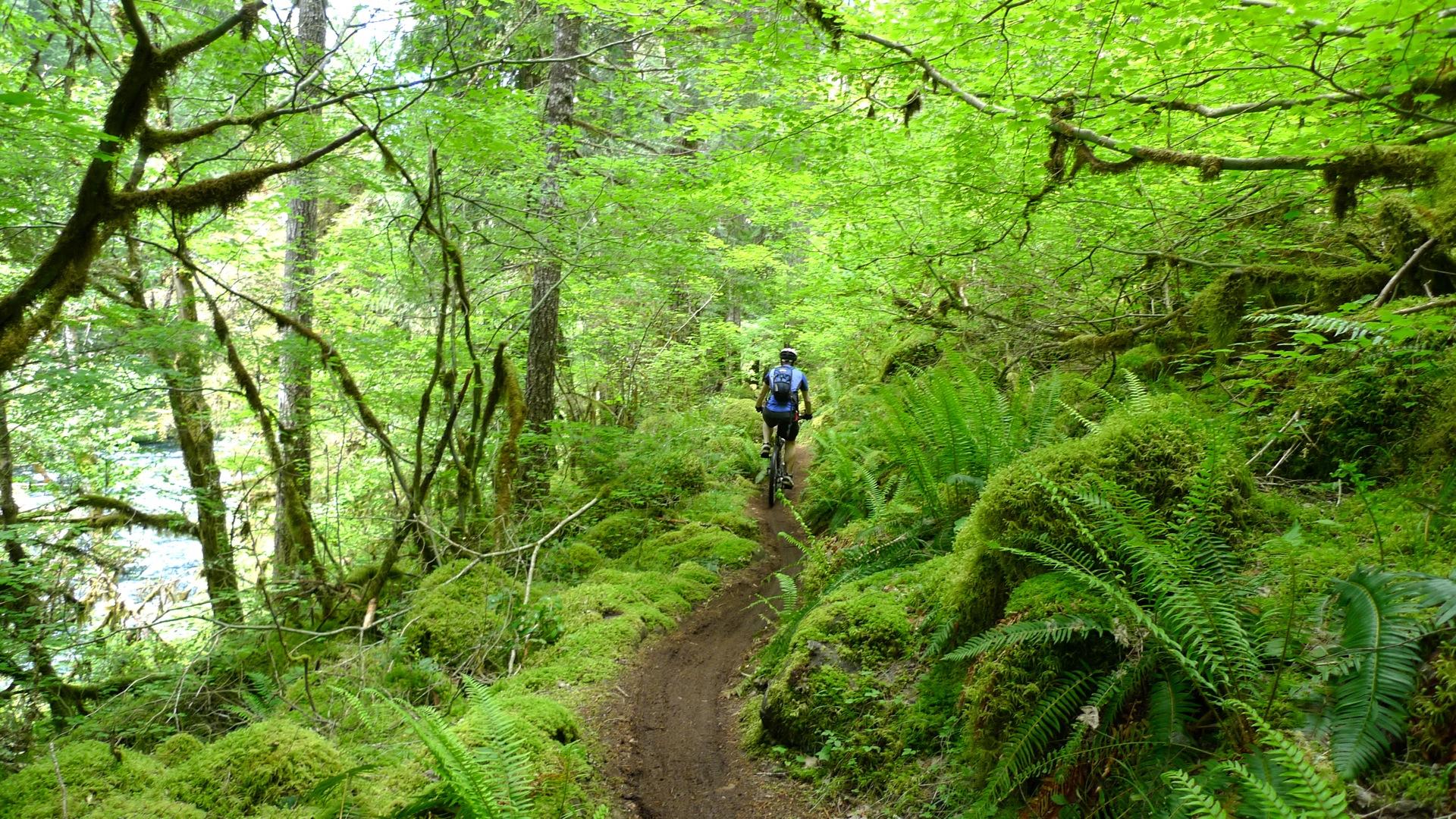 mountain bike trails   united states