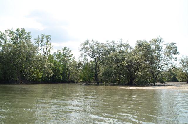 Langkawi - Mangrove