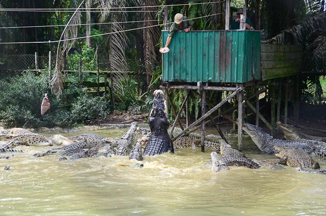 Jong's Crocodile Farm
