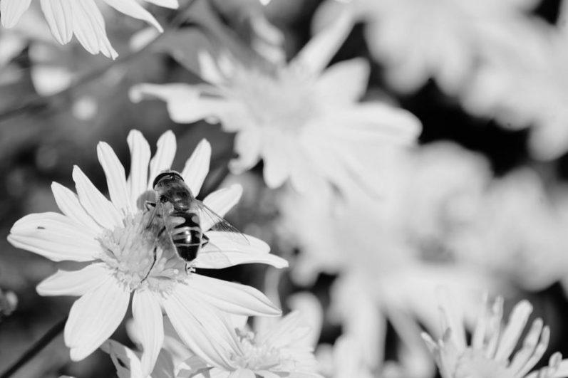 Flowers blossom