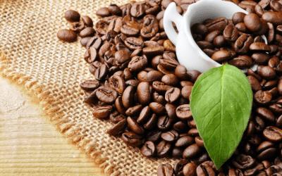 Sustainable coffee ή αλλιώς βιώσιμος καφές: Η νέα τάση που σέβεται!
