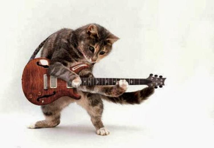 funny-cats-playing-guitar-new--5114