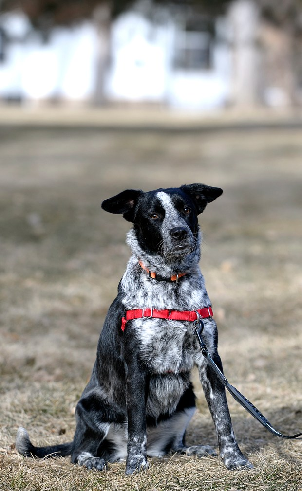 """Local rescue """"Aspen"""" to take the field at 2020 Puppy Bowl"""