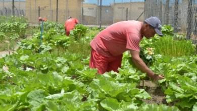 Photo of Reeducandos produzem alimentos orgânicos dentro do presídio