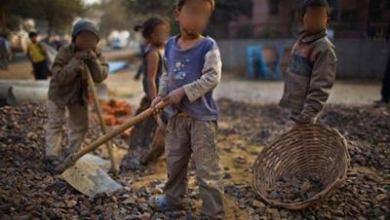 Photo of ALAGOAS: trabalho infantil reduz mais de 60% na agricultura