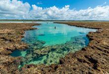 Photo of ICMBio autoriza reabertura em toda APA Costa dos Corais para visitação