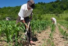 Photo of Senado aprova auxílio financeiro para agricultores familiares