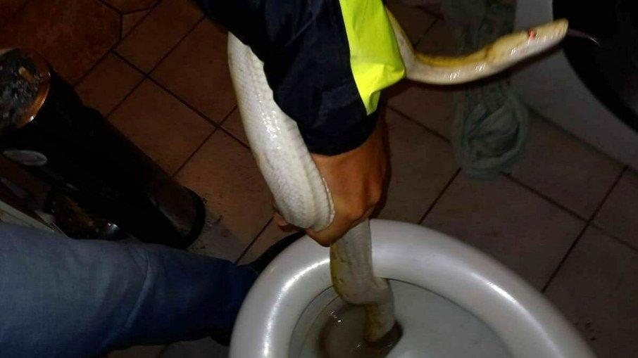 Rapaz encontra cobra de dois metros escondida em vaso sanitário