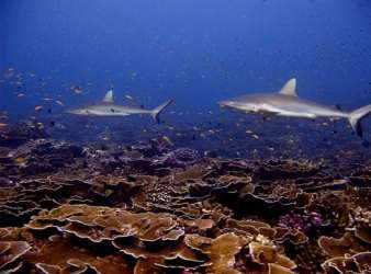 Loss of Large Predators Has Caused Widespread Disruption of Ecosystems