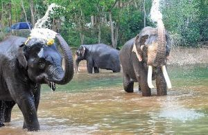 Cruelty to animals: HC asks Kerala govt to produce district-wise details of animal welfare organisations