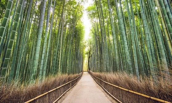 Non solo per i panda: le insospettabili virtù gastronomiche del bambù