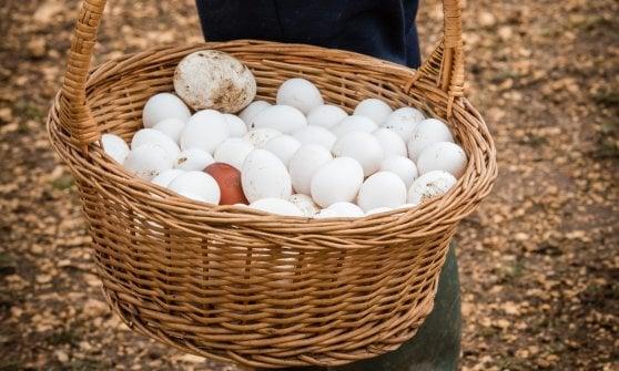 Genuine, sostenibili e piene di gusto: le uova alla canapa