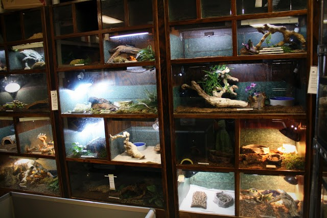 dream reptile room
