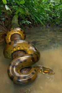 Beautiful green anaconda - reptiles are basically pokemon