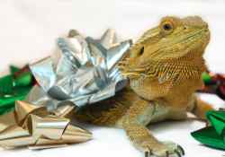 Featured image for post on not getting a reptile for Christmas