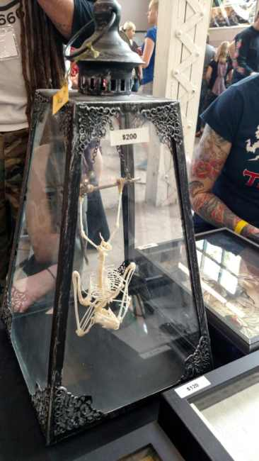 Bat skeleton for sale at the Spring 2017 Wasatch Reptile Expo
