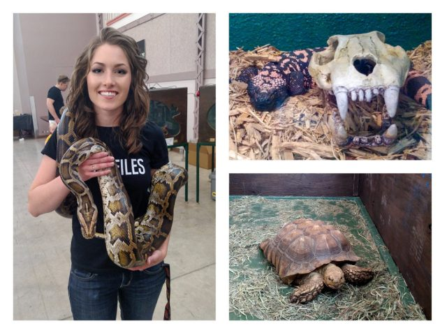 ReptiFiles with burmese python, gila monster, and sulcata tortoise at the Spring 2017 Wasatch Reptile Expo