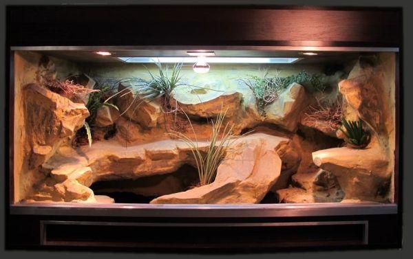 leopard gecko terrarium decorations