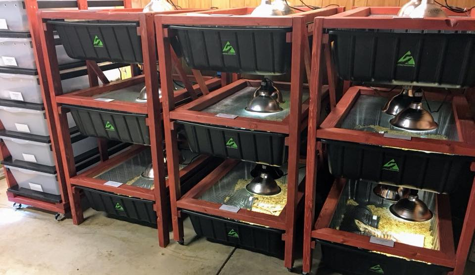 Tanks vs Tubs — What is the Best Type of Reptile Enclosure?