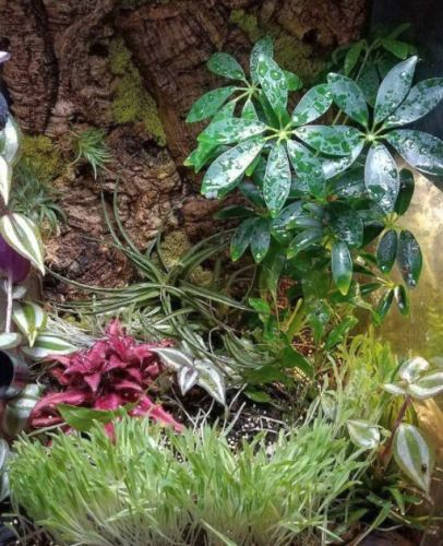 The Ultimate Mourning Gecko Care Guide - Mourning Gecko Vivarium Design