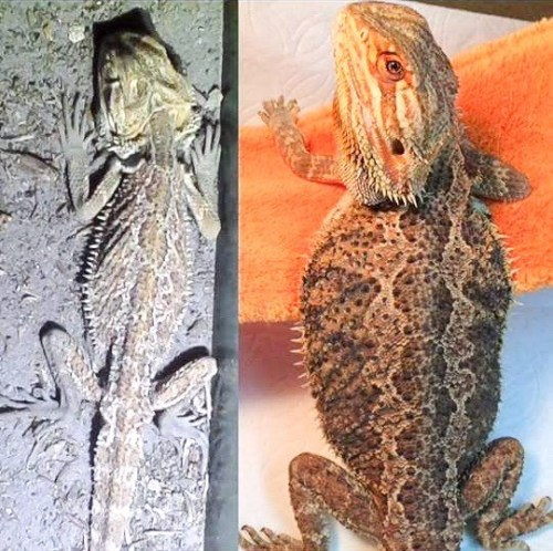 Do You Have What it Takes for Reptile Rescue?