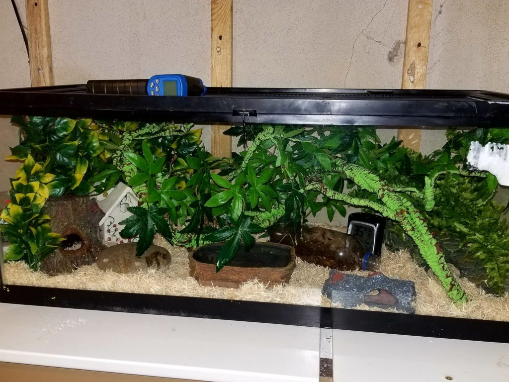 Corn Snake Accessories | Decorating Your Corn Snake's Terrarium