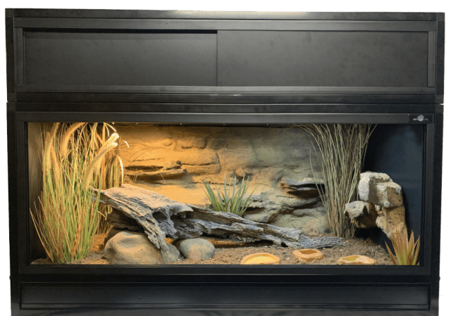 Sudan plated lizard enclosure - sample
