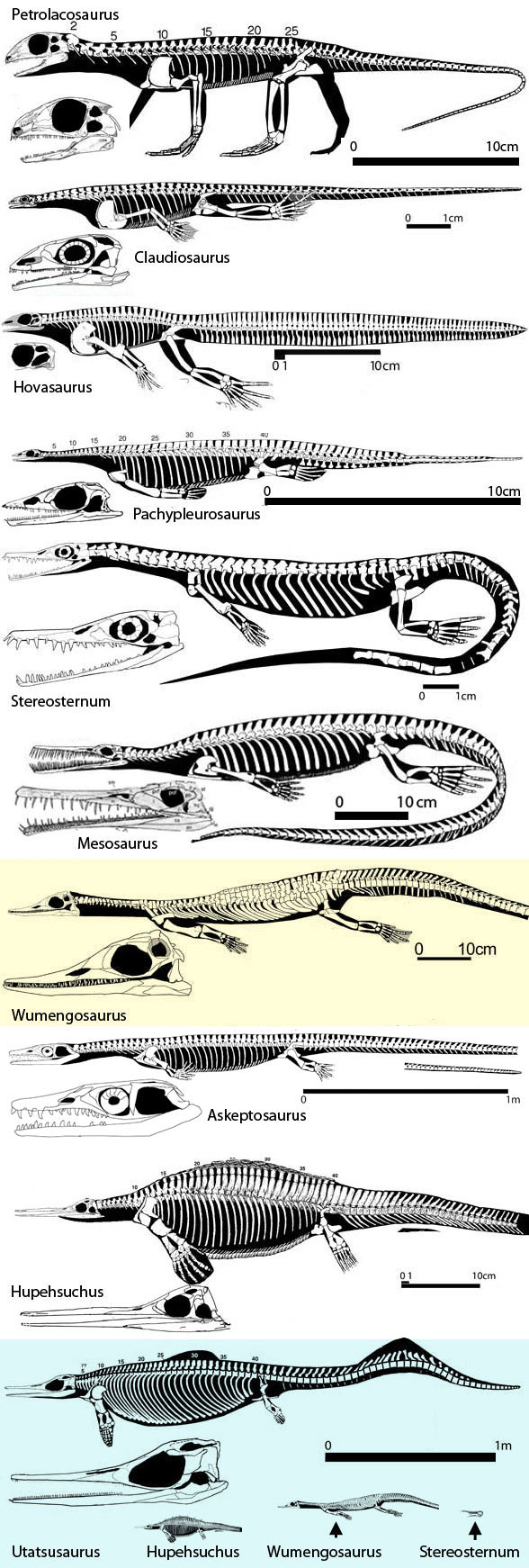 Petrolacosaurus to Ichthyosaurs