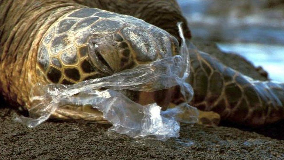 Animals Killed Trash