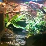 Reptiles En Captivites Paludarium Vivarium Plante