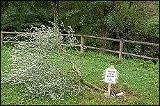 Tagliato l'albero per Impastato a Bergamo marcia di protesta