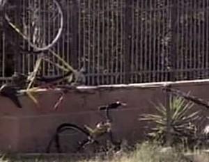 Auto uccide 8 ciclisti in Calabria Arrestato conducente, era drogato