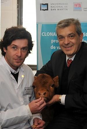 """Mucca clonata produce latte """"umano"""" il """"brevetto"""" conteso da Cina e Argentina"""