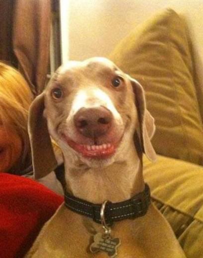 Il cane che ride spopola sul web