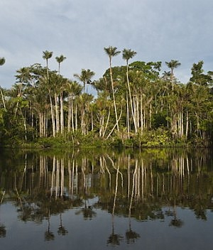 Ecuador, Foresta Amazzonica all'asta. Popolazioni indigene in rivolta
