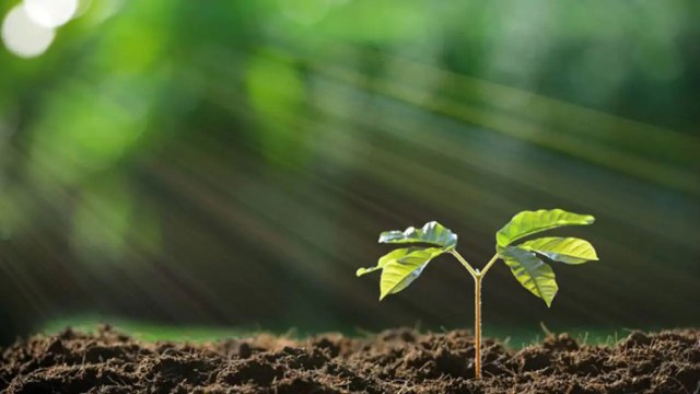 Se acelera la extinción de las plantas: 600 han desaparecido en ...