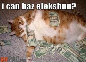 Money in politics cat