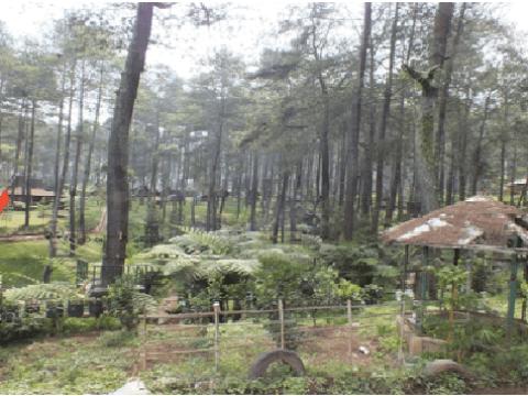 gambar wisata cikole bandung Tempat Wisata Alam Grafika Cikole Lembang Bandung Reresepan