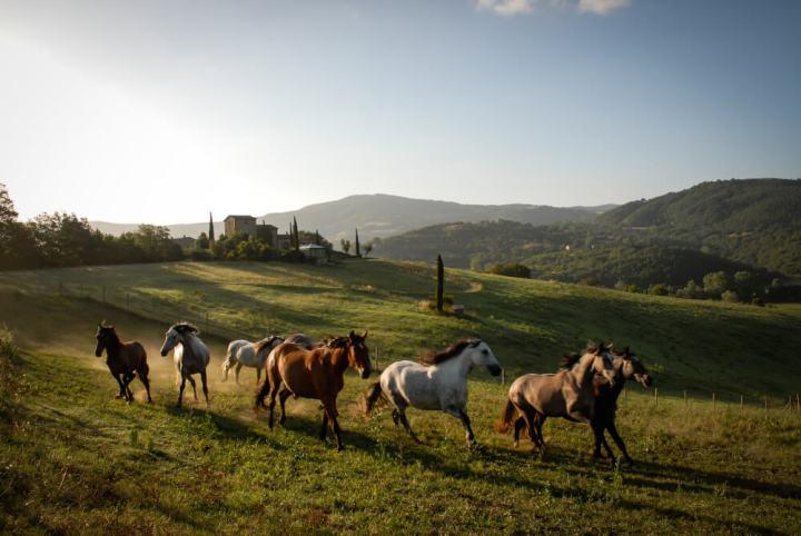 Castello di Reschio, Umbria