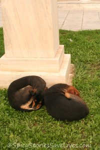 Spicy Meme Rescues Kali 2 dogs curled up next to statue outside museum 122612 crop 800