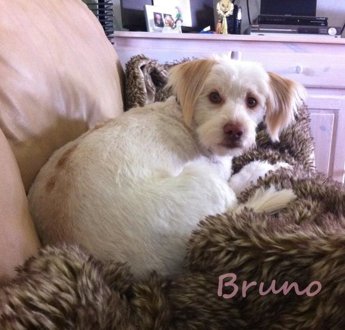 Why do we love these groups? Bruno is just one of the reasons. Danish re-homing group Graeske Hunde found him a wonderful forever family. (Read more about Bruno below.)