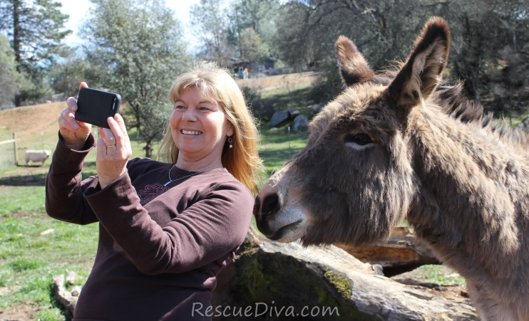 Animal Film Festival in California's scenic Gold Country offers clear air, fresh perspectives, new friends