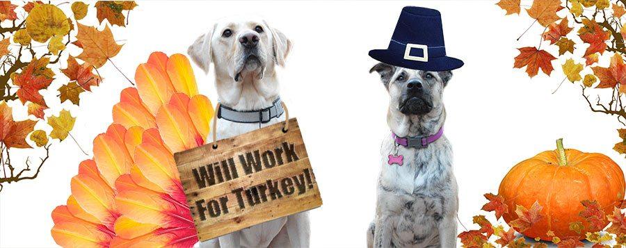 Consejos de seguridad para perros en Acción de Gracias