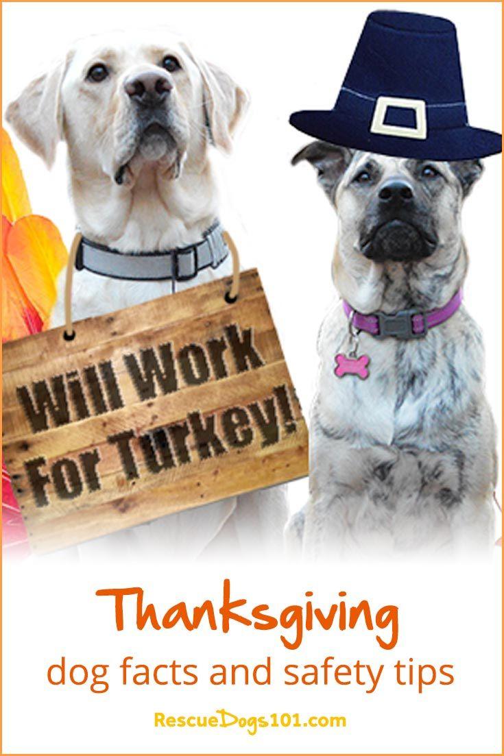 Datos y consejos de seguridad para perros de Acción de Gracias